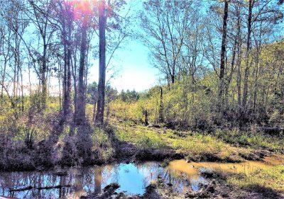 Investment land for sale in Acadia Parish