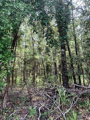 Louisiana recreational land for sale