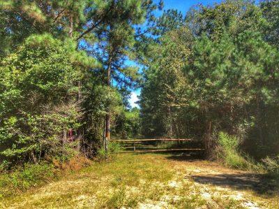 Allen Parish Hunting property for sale