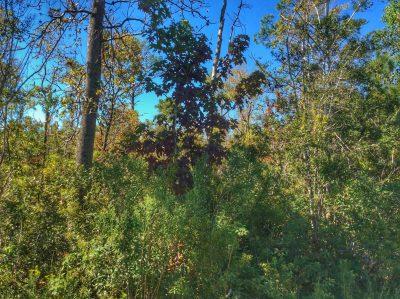 Hunting property for sale in Beauregard Parish