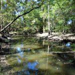Webster Parish Hunting land for sale
