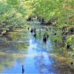 Recreational land for sale in Webster Parish