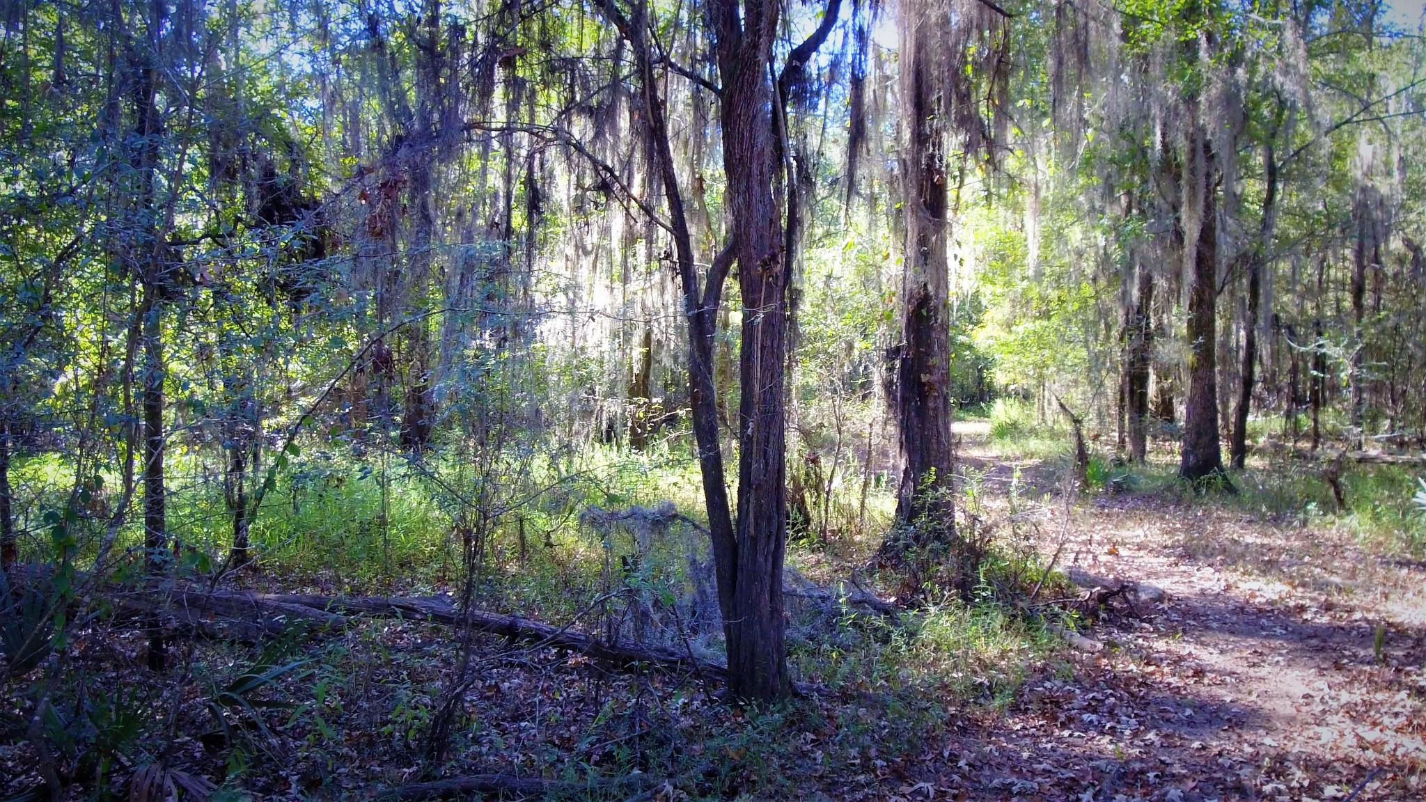 Investment land for sale in Webster Parish