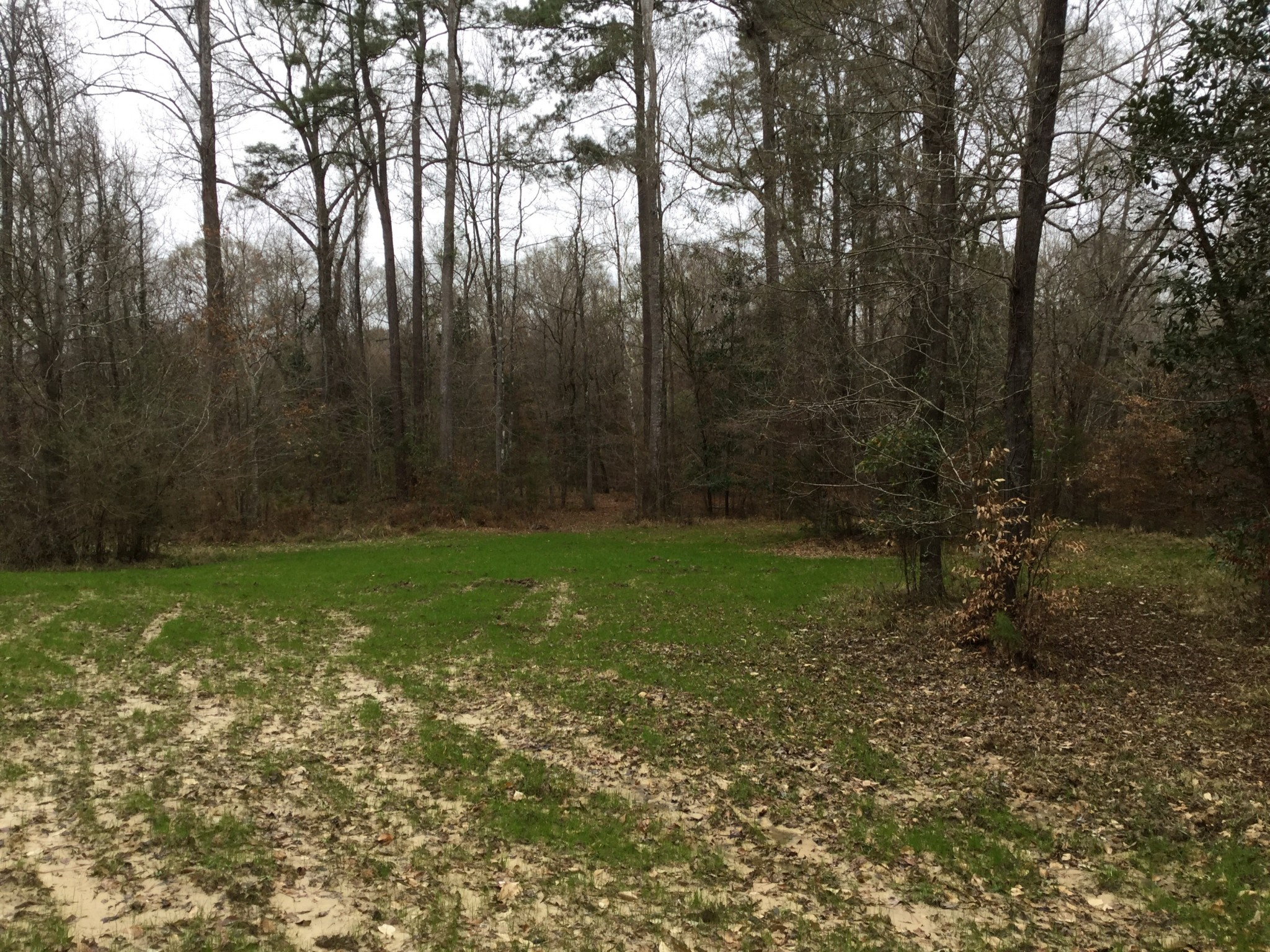 Cheerful Valley Lot 1A Tract, West Feliciana Parish, 6 Acres +/-