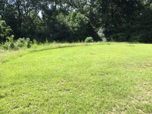 Greenwood Drive Tract, West Feliciana Parish, 3 Acres +/-