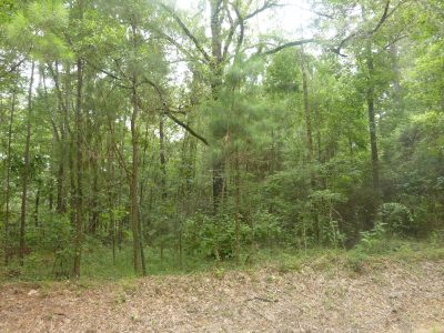 Timberland property for sale in Evangeline Parish